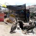 Arica Fisherman port