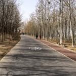 MatevzH_Beijing_runaround-3374